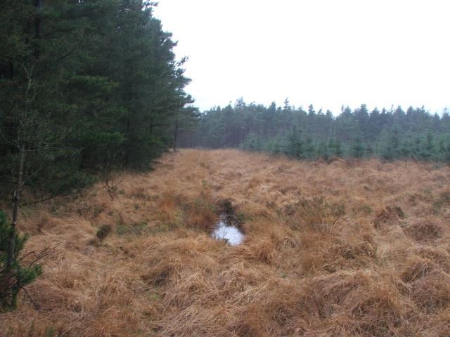 Clearing in Cropton Forest.