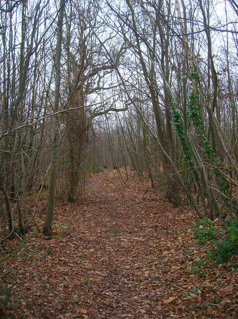 Morley Wood