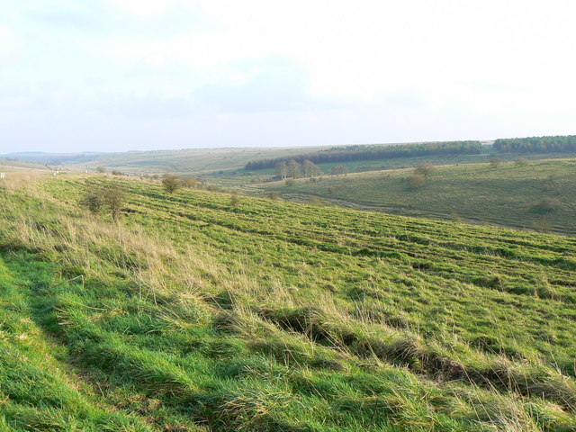 Unnamed plantation, Imber Range, Salisbury Plain