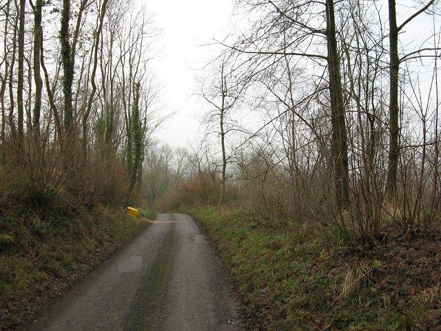 The Real Killhorse Lane