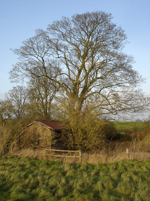 Old shed, Goss Covert