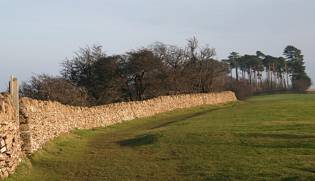 Cotswold Stone Wall and Copse