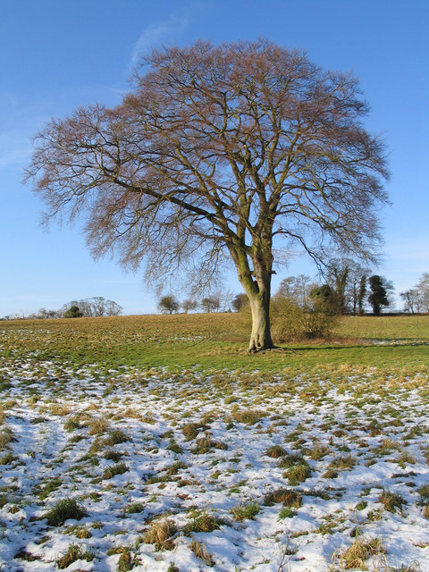 Tree in Winter, between North Barsham and Houghton St. Giles