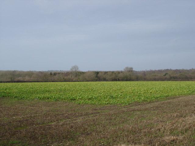 Farmland by Tarrant Gunville Reservoir