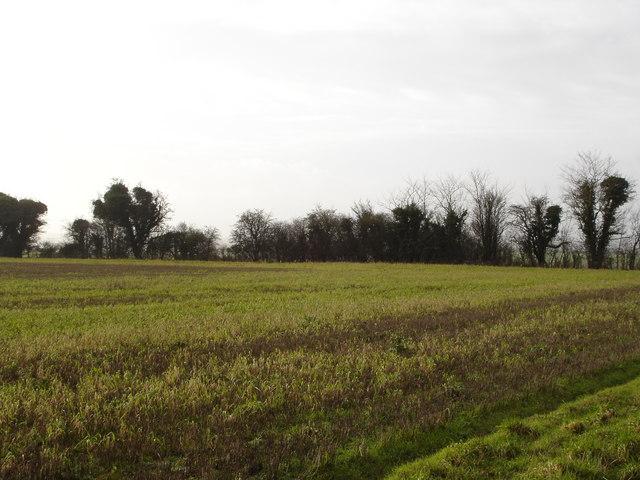 Down farmland near Harbin's Park