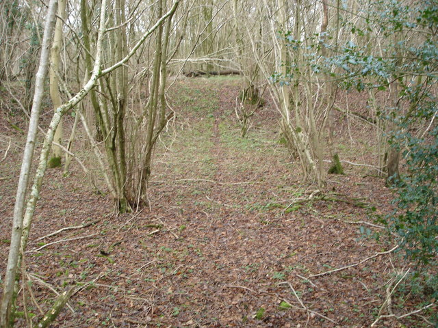 The Pit in Bull Pit Coppice