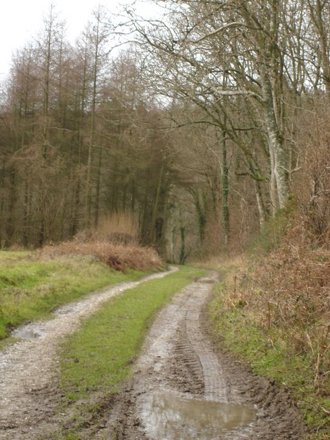 Track by Bull Pit Coppice