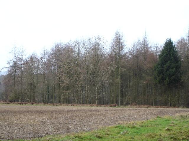 Preston Wood