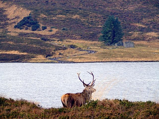 Garvault Ruin  Loch Merkland