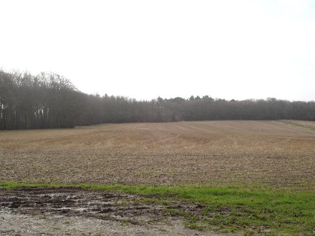 Field on Hill Farm