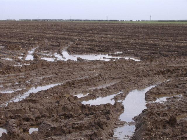 Speeton Field