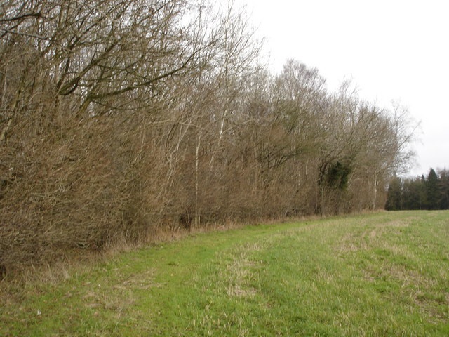 Beside Lime Pit Coppice