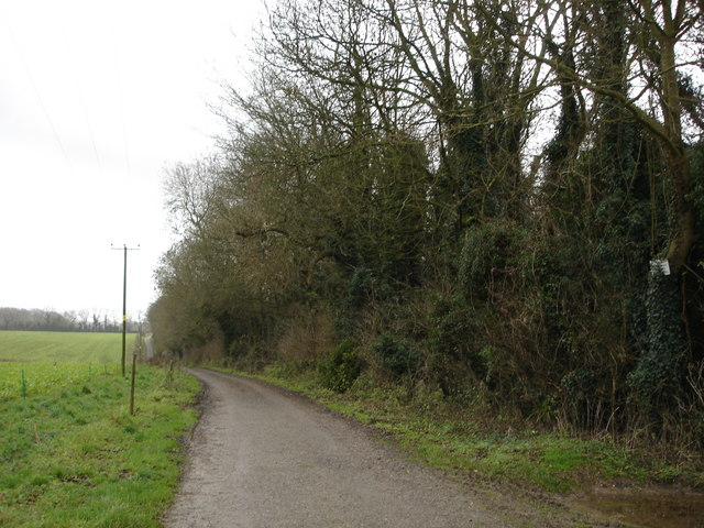 Eastern Edge of Main Down Plantation