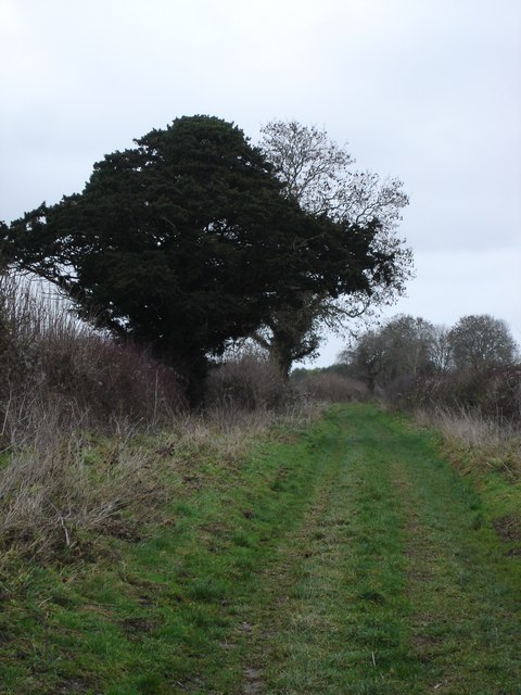 Track along south edge of Bussey Stool Farm