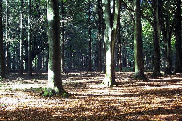 Stately Trees