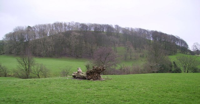 Highlander Wood