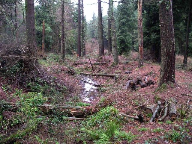 Earthwork in Chepstow Park Woods