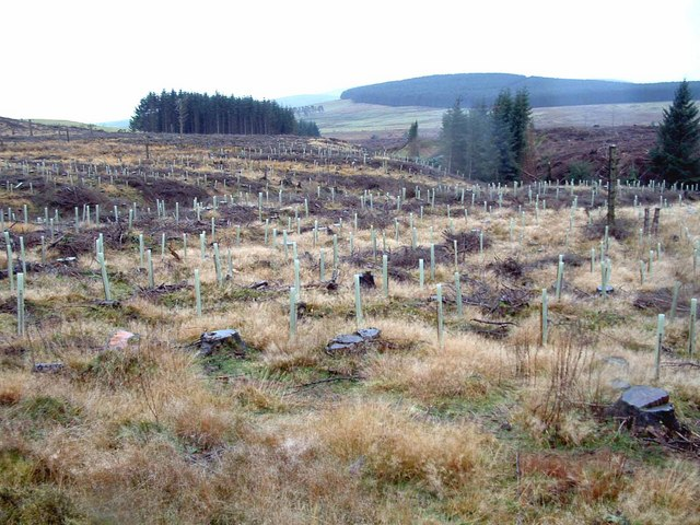 Replanting Forestry
