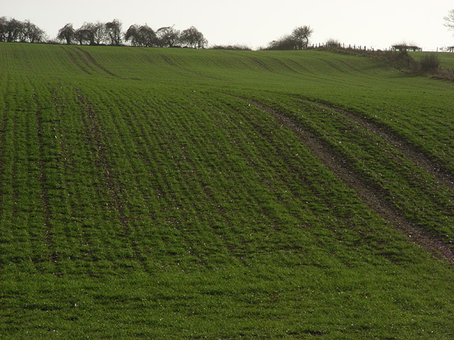 Arable farmland, Twinley