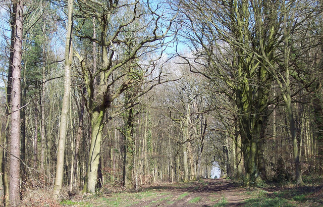 Broad Footpath into Grovely Woods