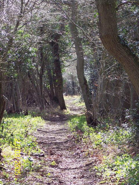 Bridlepath from Ox Drove to Knighton Wood