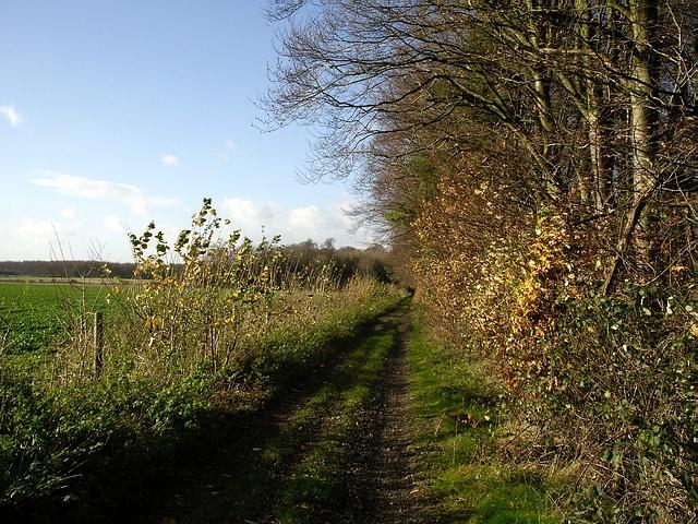 Track by Crawley Down wood