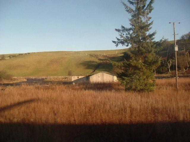 Sheep pasture near Grantshouse.