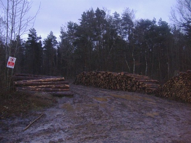 Timber stacked at Somerford Common