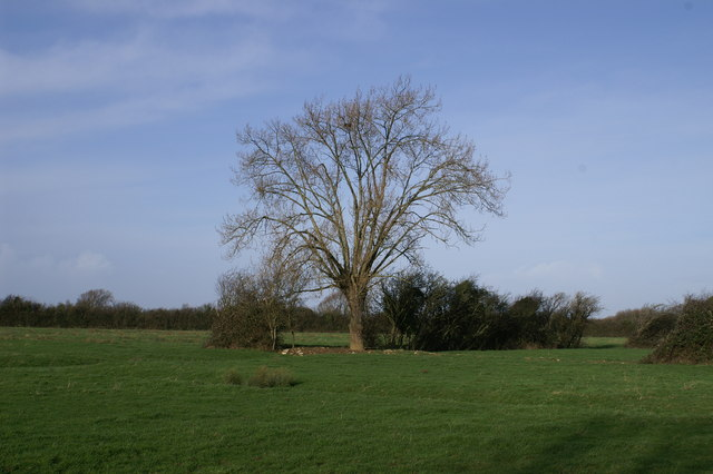 Field on Sedgemoor