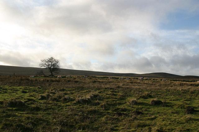 Rough pasture west of Corsenside road-end