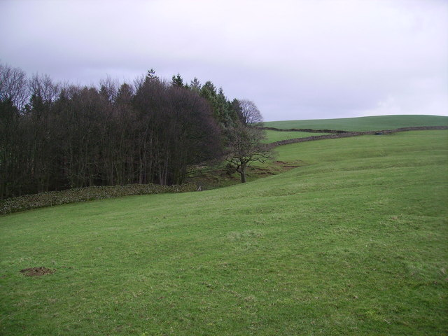 Spinks Gill Wood