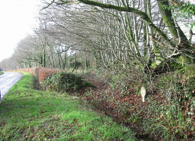 Hedgerows by entrance to Broadsmoor Farm