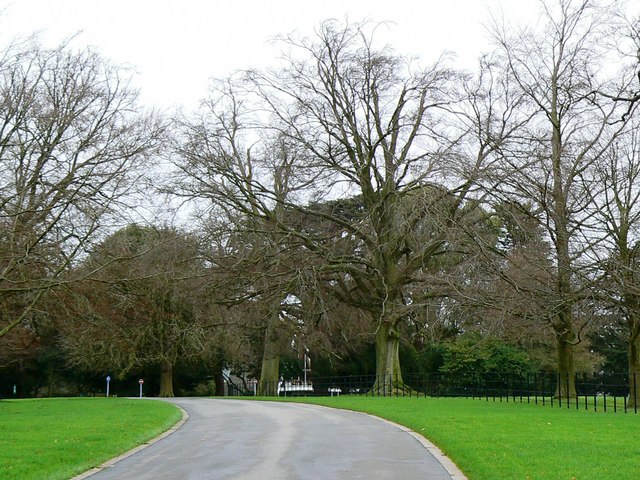 Stand of trees, Kingsdown Crematorium