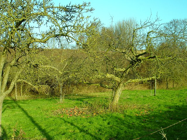 Orchard by the railway line