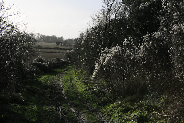 Wayfarer's Walk approaching Totford
