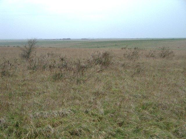 View across Urchfont Down