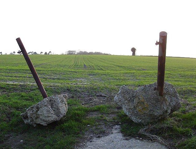 Winter wheat on Wildmarsh Farm