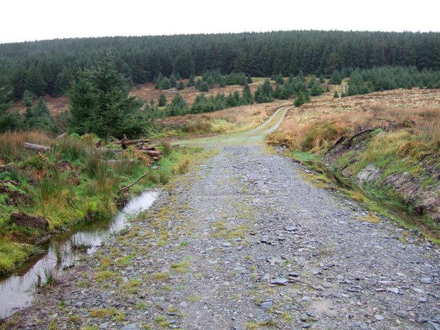 Pantmaenog forestry tracks