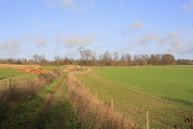 Wayfarer's Walk emerges from Abbotstone Woods, nr Swarraton