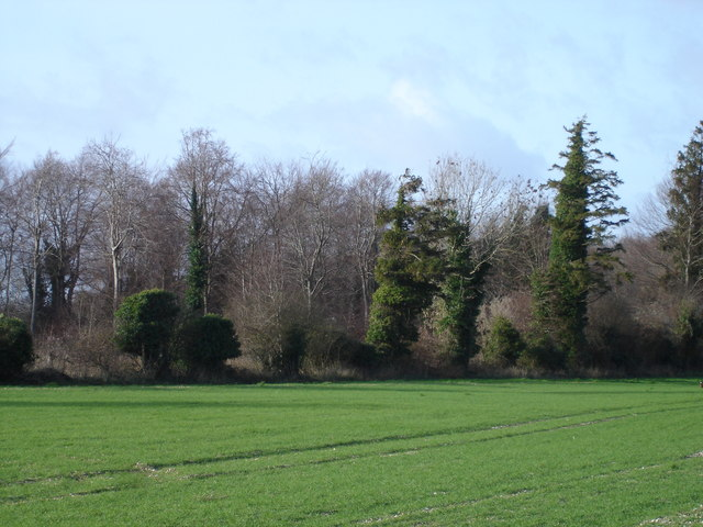 Northern end of The Drive Plantation