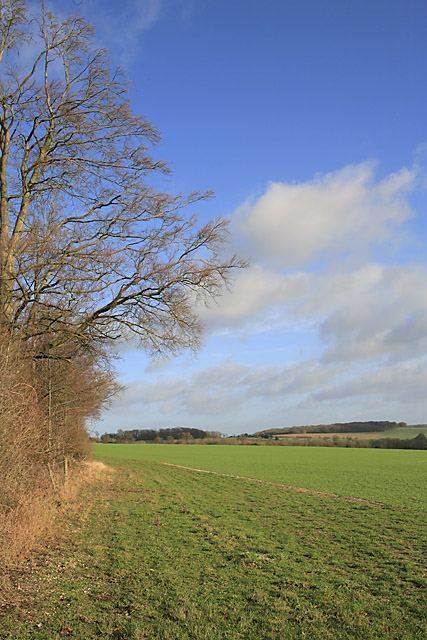 Farmland south of Spy Bush Plantation, nr Swarraton