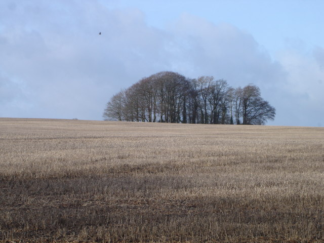 Trees on hill south of Blagdon Farm