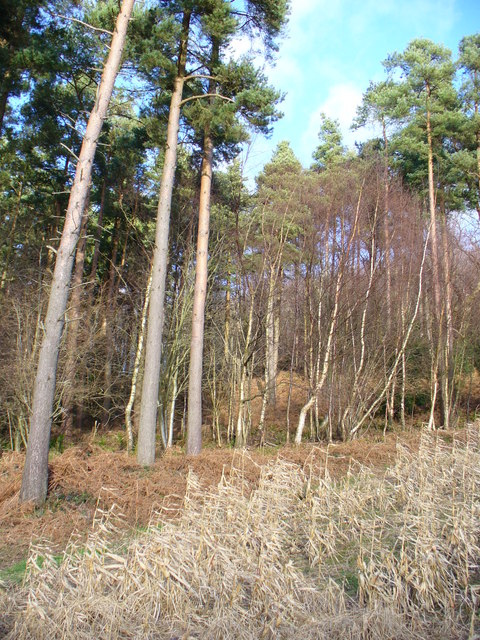 Woods near Sheetland