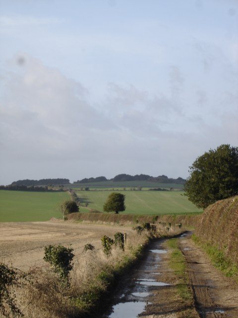 Track from Boveridge Farm to Toby's Bottom