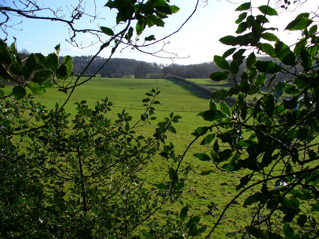 Fields by Ridden Corner Copse