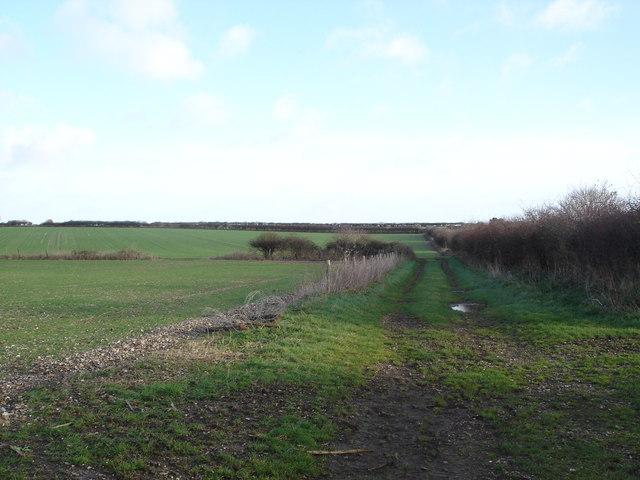 Downland north of Monkton Up Wimborne