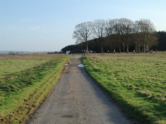 Trees and byway at Lavington Folly