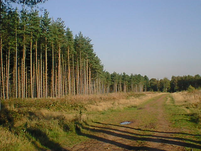 Clumber Park Forestry