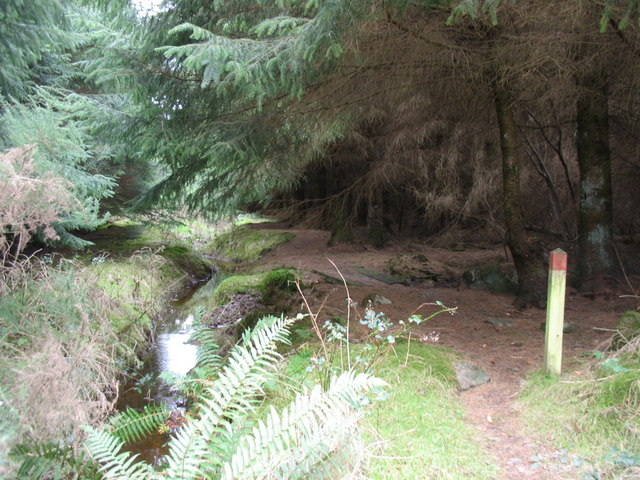Waymarked forest path alongside the youthful Afon Cegin