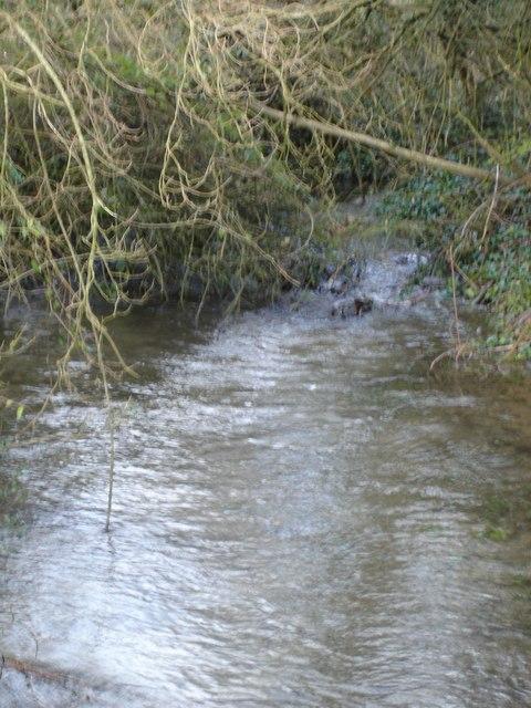 The River Crane at Bowldish Pond